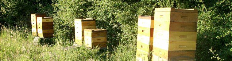 Bienenstand der Imkerei Dettlaff